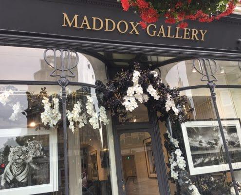 Maddox Gallrey
